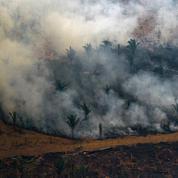 Argentine : 6500 hectares de forêt ravagés par des incendies dans le sud du pays