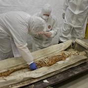 Découvert à Arras, le rare sarcophage du Bas-Empire romain livre ses premiers secrets