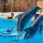 Trop malade pour supporter un transfert, un des dauphins du Parc Astérix euthanasié
