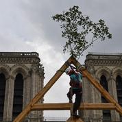 À la recherche des chênes pour reconstruire la flèche de Notre-Dame