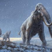 Le plus vieil ADN du monde séquencé sur un mammouth