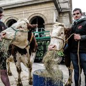 À Lyon, des agriculteurs manifestent devant la mairie contre les repas sans viande dans les cantines