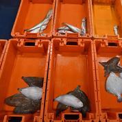 Quotas de pêche : l'Union européenne «confiante» sur un accord d'ici fin mars