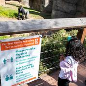 Berlin : naissance d'un bébé gorille au zoo, une première en 16 ans