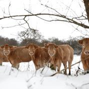 L'exécutif débloque 60 millions d'euros d'aides d'urgence aux éleveurs