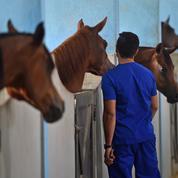 Rhinopneumonie, l'épidémie meurtrière qui frappe le milieu équin