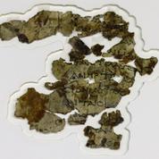 De courts extraits de la Bible, datant du IIe siècle, découverts dans le désert de Judée