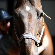 Prime «Macron»: le monde de l'équitation veut la prise en compte des salariés des centres équestres