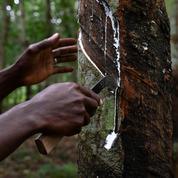 Caoutchouc: la Côte d'Ivoire, 1er producteur africain, désormais 4e mondial