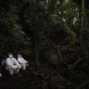 Ces «chasseurs de virus» qui traquent les chauves-souris pour éviter une prochaine pandémie