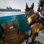 La Marine nationale saisit de nouveau plusieurs tonnes de stupéfiants