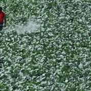 Un tiers des terres agricoles à «haut risque» de pollution aux pesticides