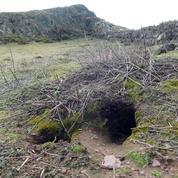 Des vestiges du Mésolithique et de l'âge du Bronze découverts grâce à des lapins gallois