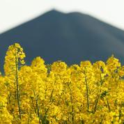 Protéines de colza pour les assiettes: 45 millions d'euros injectés par Avril et Bpifrance