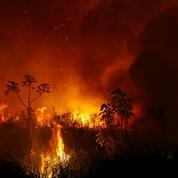 La destruction de la forêt vierge tropicale en forte hausse en 2020