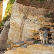 Parcs zoologiques: difficultés et incompréhensions en attendant la réouverture