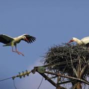 Espagne: Endesa devant la justice après l'électrocution de centaines d'oiseaux