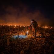 Au chevet des vignobles, un cauchemar de feu et de glace