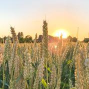 Le blé soutenu par le froid et par Chicago