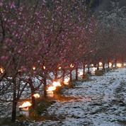 Épisode de gel : sans le réchauffement climatique, «les plantations auraient dû résister»