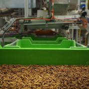 Foodtech: Ynsect s'internationalise en rachetant Protifarm aux Pays-Bas