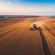 Chicago: maïs, soja et blé en hausse dans un marché volatile