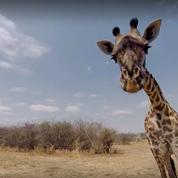 Wild at Home : on a testé le tout premier «safari virtuel» à domicile