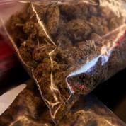 Arles : trois tonnes de cannabis saisies dans un camion de tomates
