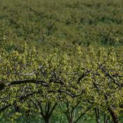 Des arrêtés anti-pesticides annulés dans trois communes de Gironde