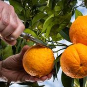 L'agriculture, première source de pollution de l'eau potable en France, selon l'UFC Que Choisir