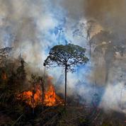 Bolsonaro, le paria du climat au sommet de Biden