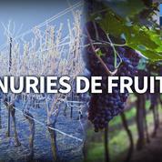 Gel : une hausse des prix des fruits et légumes est possible
