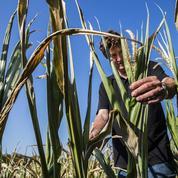 Les céréales reprennent leur ascension sur fond de temps trop sec