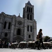 Le chantier du «remontage» de la flèche de la basilique de Saint-Denis débutera en septembre