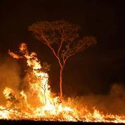 Depuis 2010, la forêt amazonienne émet plus de carbone qu'elle n'en absorbe, selon une étude