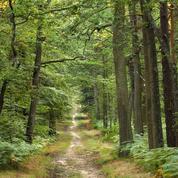 Aveyron : un enfant de deux ans perdu dans les bois retrouvé par les gendarmes