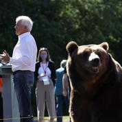 Californie: un candidat au poste de gouverneur fait campagne avec un ours