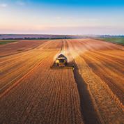 Le blé reprend son souffle, le maïs toujours en forte hausse