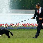Mort de Bo, le chien de Barack Obama et star de la Maison-Blanche