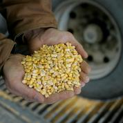 Chicago: blé, maïs et soja en hausse avant le rapport Wasde