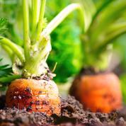 Ouverture du procès d'un trafic de pesticides interdits dans la Manche