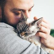 Adopter un chaton : 5 choses à savoir avant de vous lancer