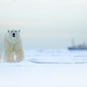 L'Arctique se réchauffe trois fois plus vite que la planète depuis 1971, avertit un rapport