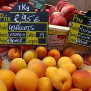 Abricots, pêches, cerises : cet été, les fruits français s'annoncent rares et chers