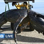 Une baleine à bosse s'échoue près de La Grande-Motte
