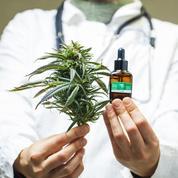 Maroc : les députés votent la légalisation thérapeutique du cannabis