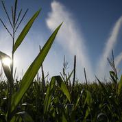 Les scientifiques s'inquiètent des risques de sécheresse cet été