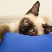 10 idées pour rendre votre chat heureux pendant votre absence