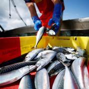 Pêche: l'Union européenne et le Royaume-Uni trouvent un accord pour les prises en 2021