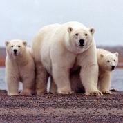 Washington suspend les forages de pétrole dans une zone protégée de l'Arctique